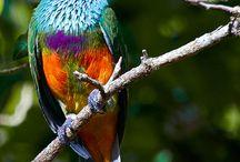 Nature /  Birds