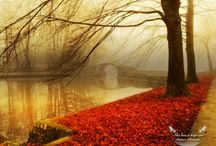 Love Of Fall / The  Colours, the Weather, the Feeling... / by Myst Designs