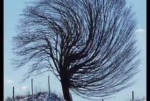 #strom