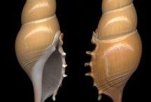 Shells= Scoici