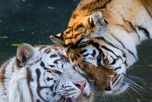 Animals / zde si ukládám obrázky zvířat