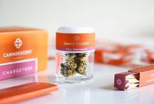 Future of Cannabis