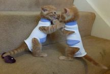 γατα και το ποντικι