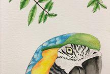 My rainforest illustrations