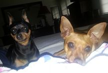 Our Min Pins / by Cheryl Hedstrom