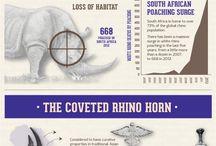 Rhino Poaching Education