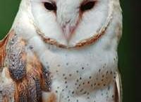 Owls! / by Liz Budd