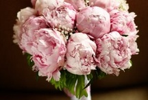 Peonie and more