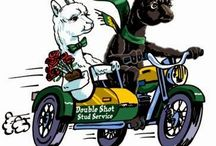 Alpaca for Motorcycle Riding Adventures