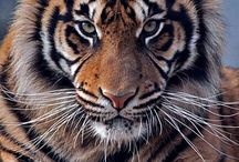 JOKO- ZVIERATA- Animals / joko.sarkozi@gmail.com