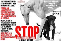 Say no to Greyhound Racing