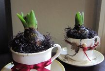 Gift planters prepared for Christmas  / Ideas for planted containers for home or gifts....