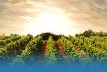 ASB Yağmurlama Sulama / Asb Yağmurlama ve Damlama Sulama kurulduğundan bu yana Tarım sektörünün ihtiyaç duyduğu basınçlı damlama sulama sistemleri adı altında; yağmurlama sulama sistemleri, damlama sulama sistemleri, filtre sistemleri ve yeni nesil kaplinler üretimini yapmaktadır.  Ülkemizin önde gelen firmaları arasında yer alan firmamız ürettiği sulama ürünleri ile ülkemizde basınçlı sulama sistemlerinin kullanılması ve yaygınlaşmasında öncü olmaktadır.
