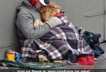 love and companionship