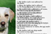 Beau, My Big Yellow Lab & Other Pets! / For everyone who loves their pet! / by Charlene VanCleave Chambers