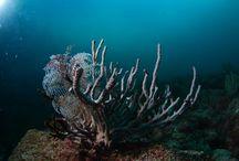 Rocio Del Mar Liveaboard / Scuba Diving in the Sea of Cortez and Socorro Islands.