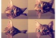 Cats i love / Miaowww