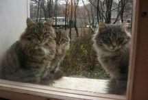 Кошечки-красотошечки