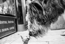 UrbanDogs / Hundebilder