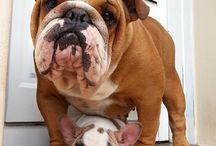 Dream dogs!