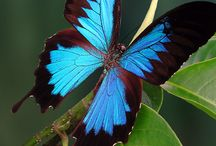 Nature - Papillons
