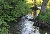 Naturen i Skivholme