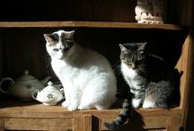 mijn katjes / bo, pluck en kylie