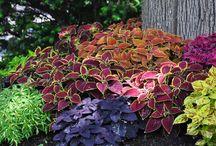 plantas  e flores vistas no pinterest