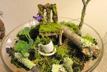 Lichen this Moss
