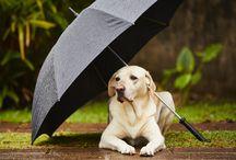¡Ni la lluvia los detiene! / ¿Llueve? A ellos no les importa, disfrutan igual  ¿El tuyo también? ¡Compartí la foto de tu mascota!