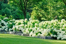 Garden / by Tania du Toit