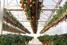 채소,과일농장
