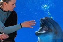 Dolphin Therapy Turkey / www.dolphintherapyland.com