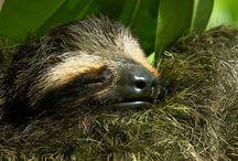 Sloth project - final moodboard