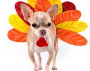 """November - A month of """"Thanks""""! / Tips, treats, and products that will help you and your dog get through the holiday season.  What do we celebrate this month? National Pet Awareness Month, National Senior Pet Month, Pet Cancer Awareness Month, and Pet Diabetes Month :-) #dogs #Thanksgiving #November #holidaydogs"""