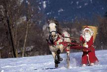 Winter Pferde