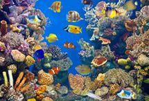 Aquarium Cleaning Tips