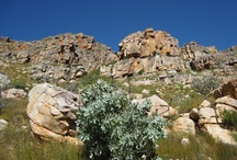 Cederberg, Western Cape / The beautiful Cederberg, a wilderness area dominated by a craggy mountain range and a nature reserve that stretches from the Middelberg Pass at Citrusdal to just north of the Pakhuis Pass at Clanwilliam - over 70 000 hectares of spectacular, rugged terrain - lies roughly two to three hours' drive, depending on how leisurely the pace, from Cape Town .... more info at http://www.sa-venues.com/attractionswc/cederberg.htm