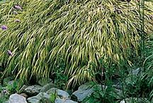 Plants for shade areas