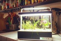 Instagram Another Basile found the perfect spot in the @laruchequiditoui kitchen in #paris ! #growyourown #healthy #laruchequiditoui #hydroponics #nogmo #organic #startup