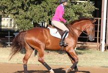 Riding exercises