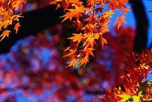 Bilder Herbst  Autumn