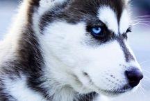 AA perros blancos, negros y grises