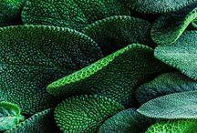Colours - Zöld