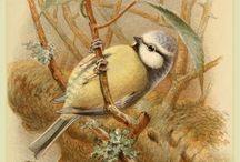 Винтаж.Птицы