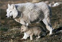 Mother and cub wolves