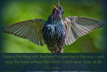 """Where There is Hope / """"Hope is the thing with feathers that perches in the soul – and sings the tunes without the words – and never stops at all."""" ~ Emily Dickinson"""