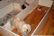 Dog Ideas