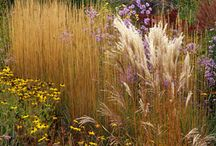 Grasslands and Meadows / Beautiful ornamental grasses. Indulge in prairie style planting. Plant with gorgeous wild flowers to bring colour, stature and wildlife into the garden. If you have poor thin soils this is a wonderful style. Great bang for your buck too.