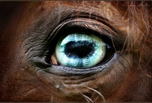 The Soul of a Horse
